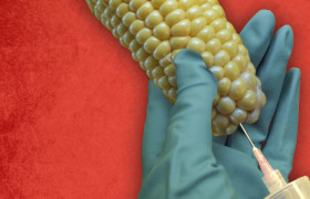 Genetically-Modified Food